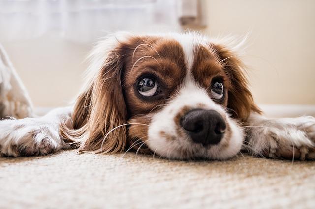 Majte psíka zútulku