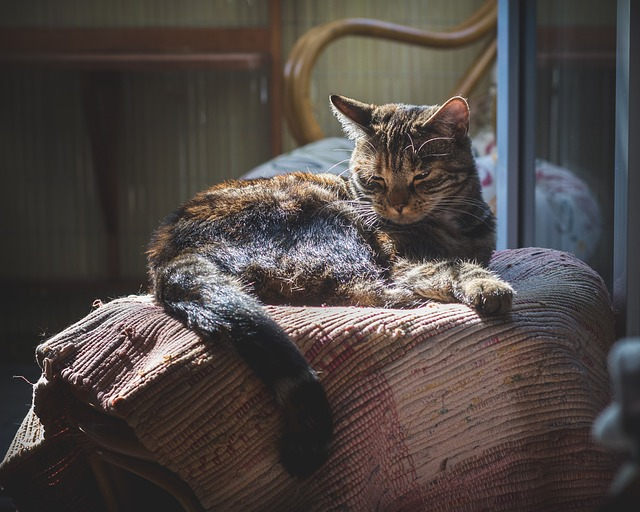 Mačka na kresle.jpg