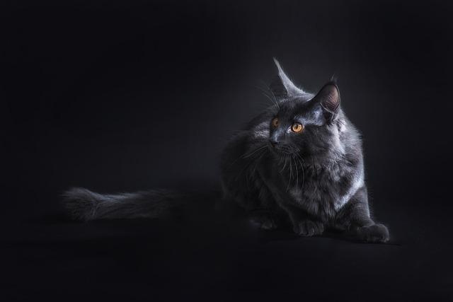 čierna mačka.jpg